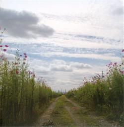 Motohiro Nakashima - We Hum On The Way Home (2009)