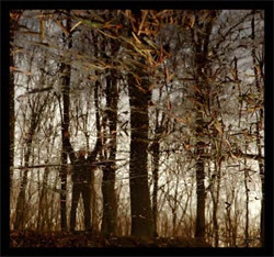 Apoptose - Bannwald (2010)