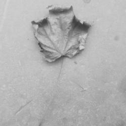 VA - Dead Leaves (2019)