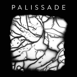 Palissade - Palissade (2020)